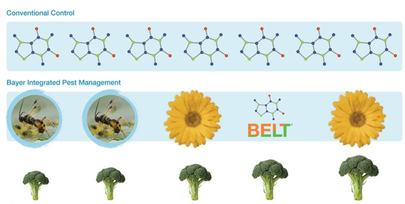 Figure 3: The e-IPM program Legend: Insect=Diadegma wasp, Flower=Bt insecticide, Molecule=Chemical Insecticide